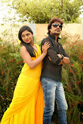 Ee Manase Movie Photo Gallery-thumbnail-13