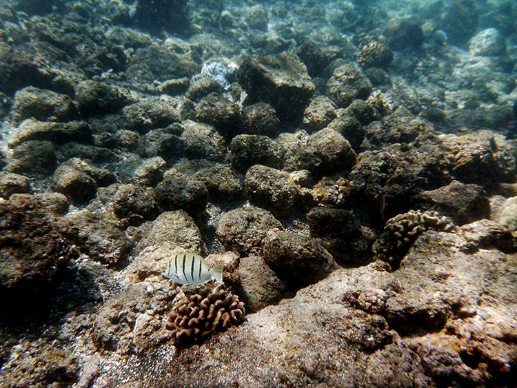 Best snorkling Honolulu