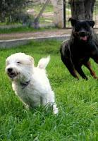 Mutsuz köpekler, sahiplerini de mutsuz ederler. Rehabilitasyon, köpeğinizin ve sizin hayatınızı kolaylaştırma yoludur. Ellbette kolay bir yol değil...