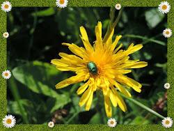 La fleur et le scarabé