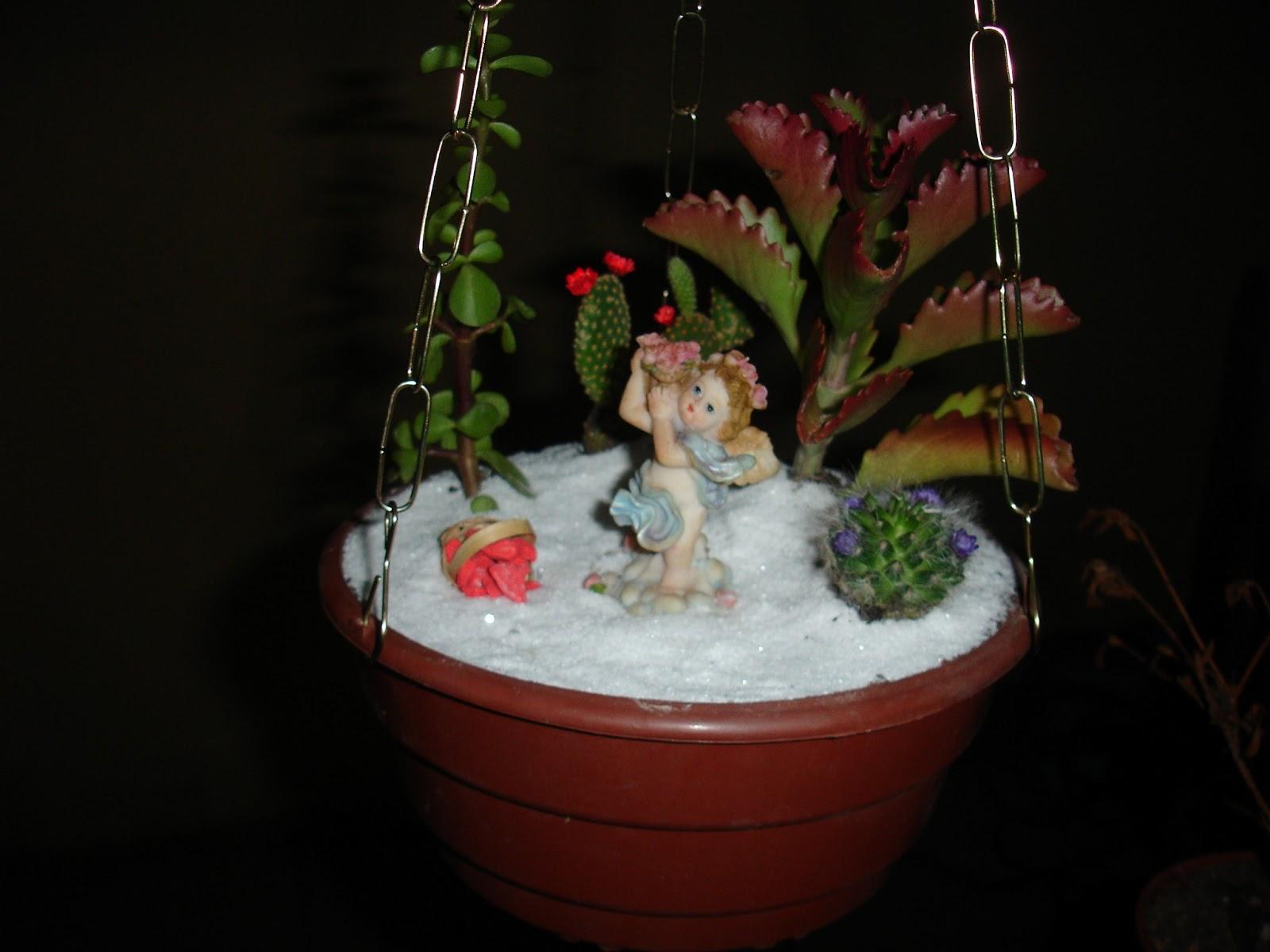 mini jardim de cactos e suculentas: com Cactos e Suculentas.: Mini Jardim Suspenso de Cactos e Suculenta