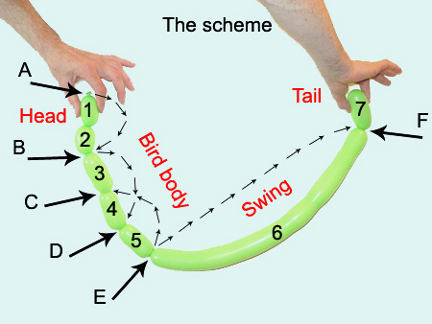 Balloon Animals Twisting Instructions How To Make Balloon Parrot