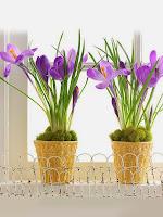 Пролетни цветя в саксия