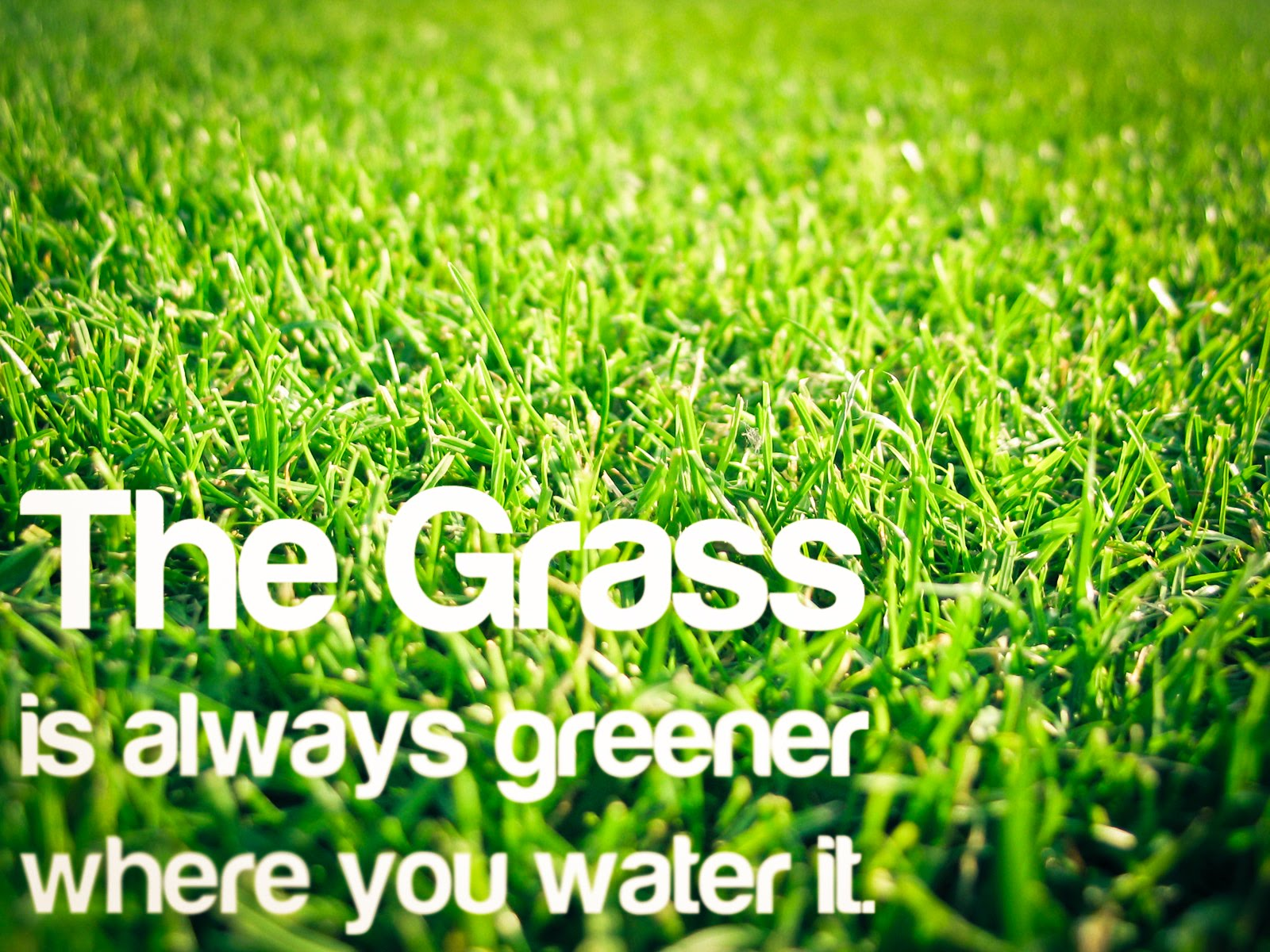 The Grass is Always Greener Wallpaper