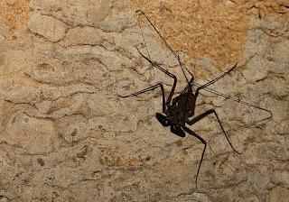 Laba-laba di gua batu cermin