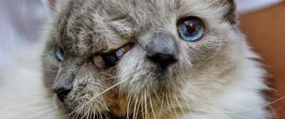 Πέθανε η διάσημη διπρόσωπη γάτα, Frank και Louie σε ηλικία 15 ετών.