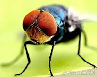 Tips mengusir Lalat dari dalam rumah