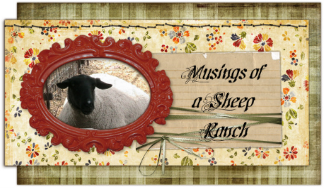 Musings of a Sheep Ranch