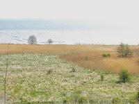 Widok z Osłonina na łąki i Zatokę Pucką