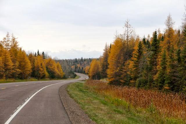 northern Minnesota tamaracks