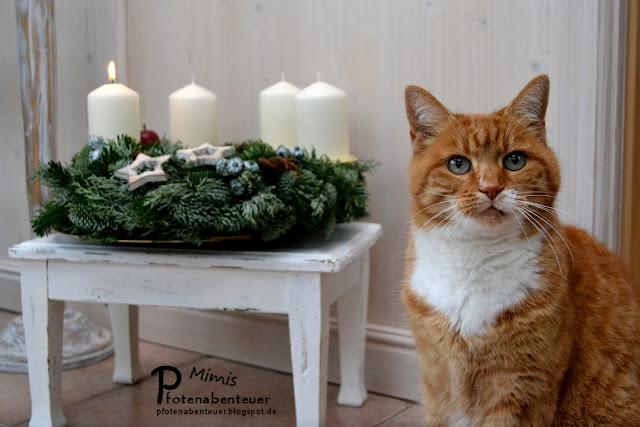 Katze Mimi und ihr Adventskranz