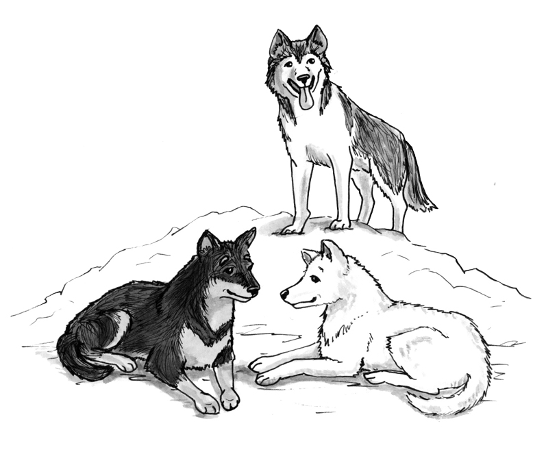 Dog Sled Team Coloring Pages Coloring