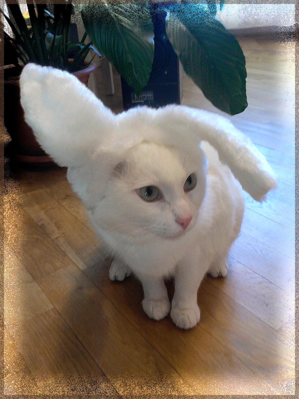 Когда был год белого кота