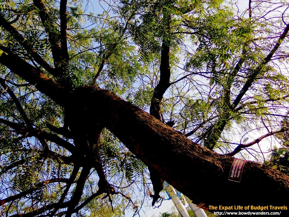 Lumbini-Park-Hyderabad-India-The-Expat-Life-Of-Budget-Travels-Bowdy-Wanders