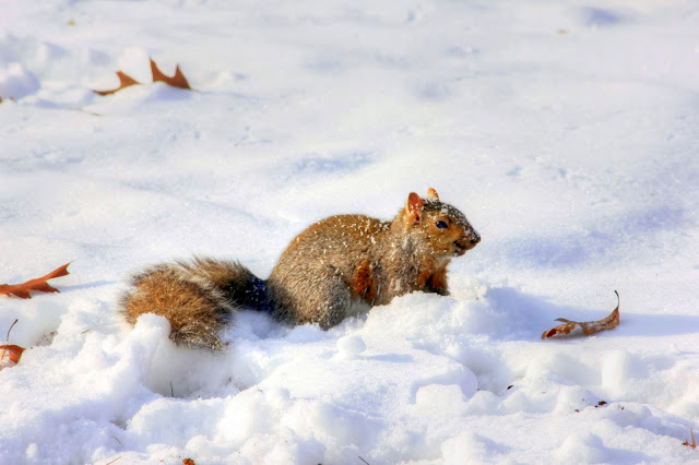 Its Soo Cold today cute squirrel