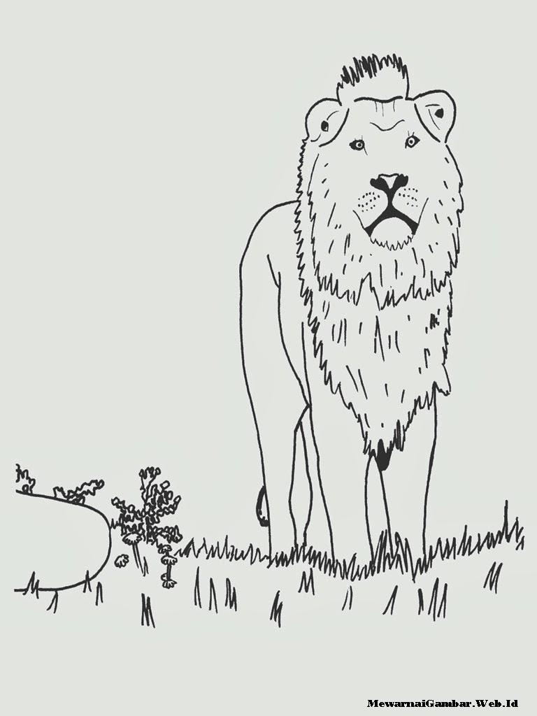 lembar mewarnai gambar singa