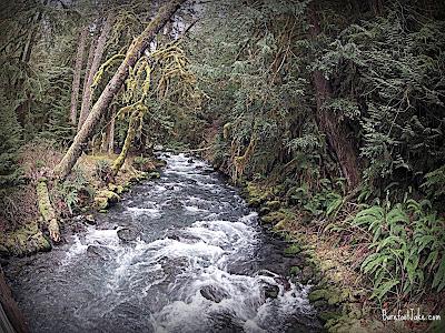 lillian river