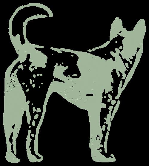 犬の尻尾(動物)