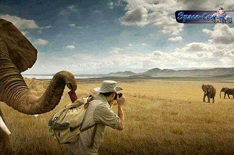 funny animals elephants picture