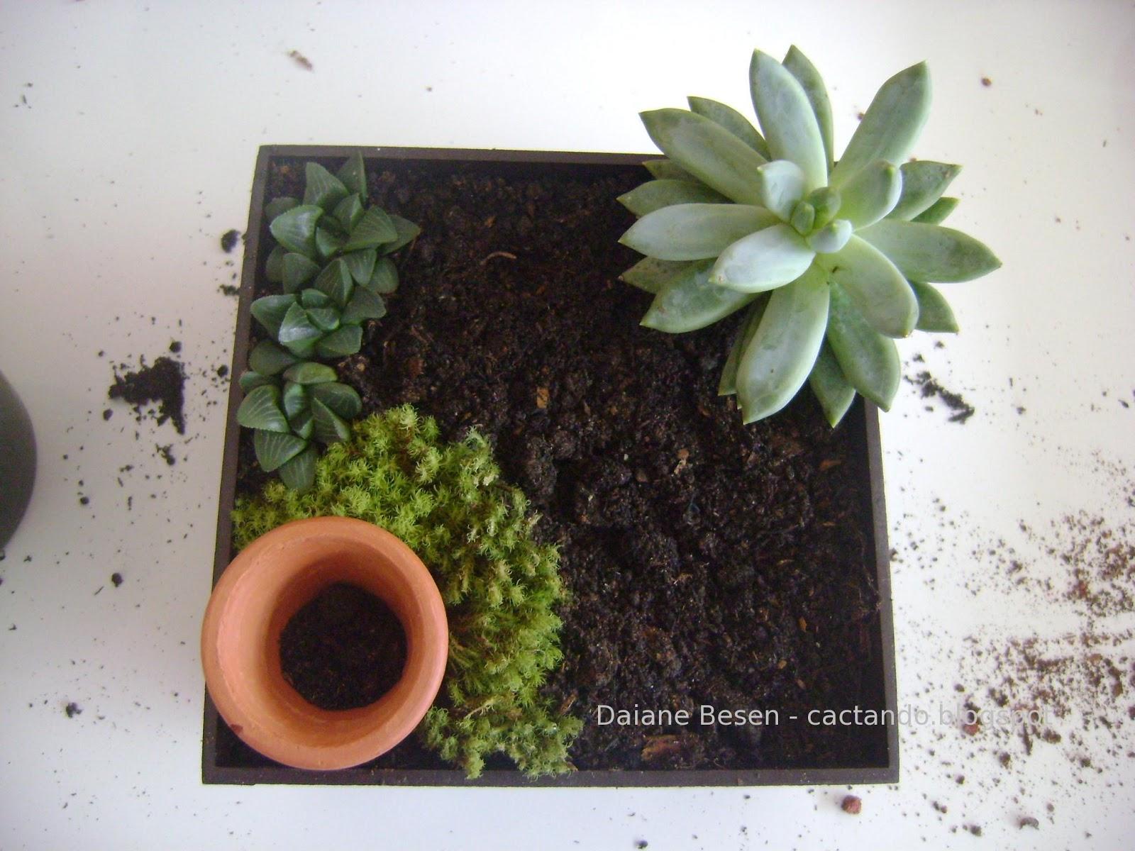 mini jardim de suculentas passo a passo : mini jardim de suculentas passo a passo:Mini jardim – passo a passo