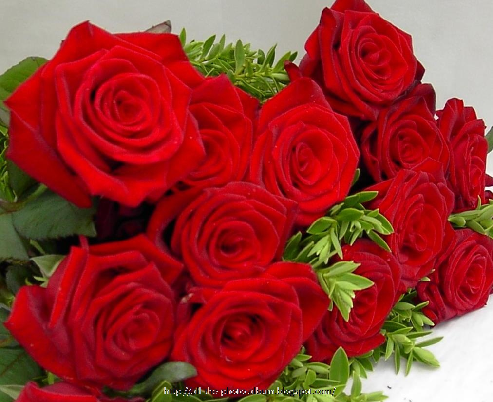 My Beautiful Picutre Album Bunch Of Red Roses With Green Leaves