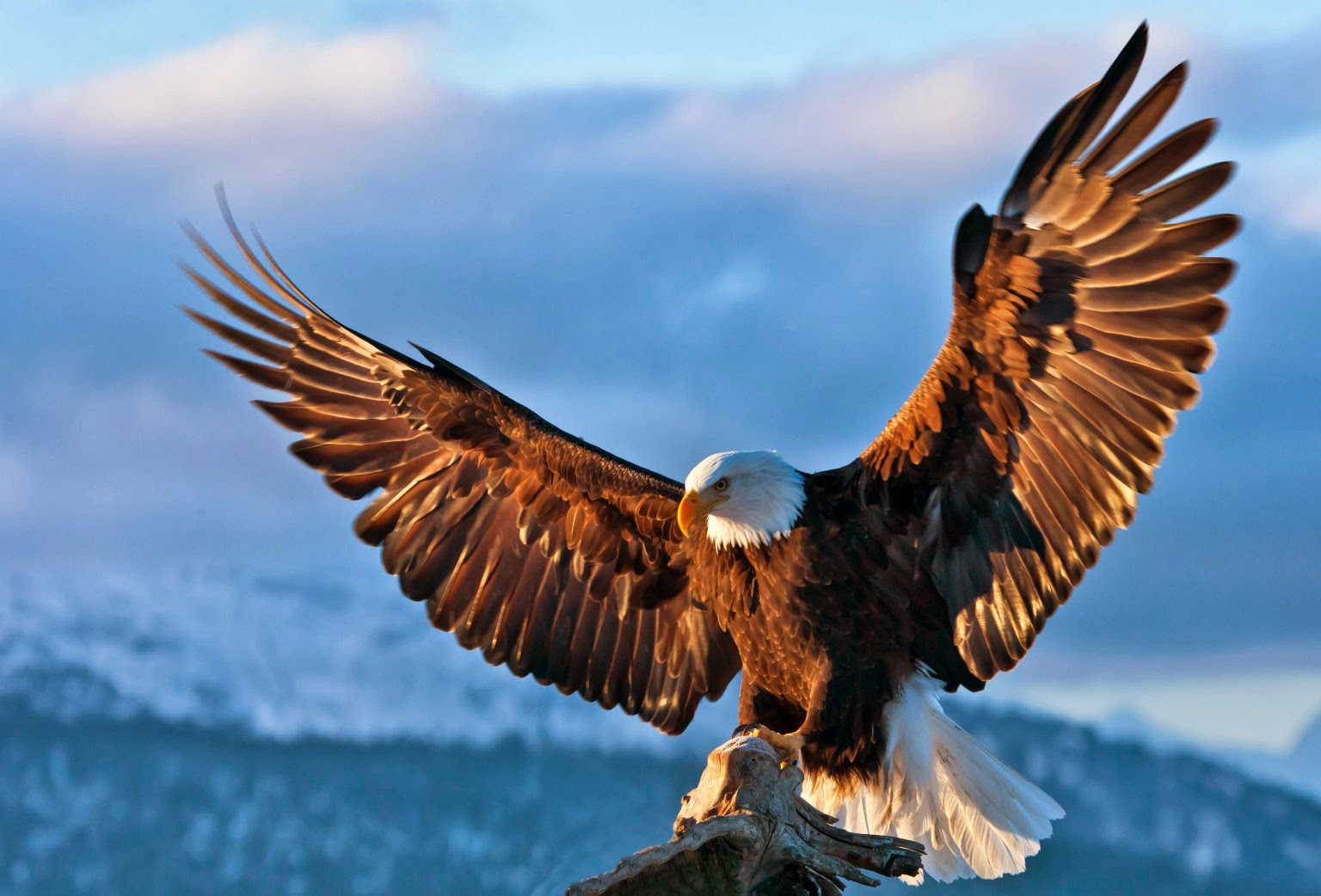 Eagle bird images - photo#2