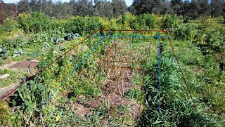 parcela tomates plantas salvajes arvenses