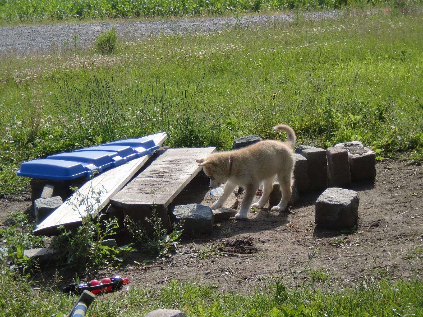 Le Bric à brac de Titia: Un Husky Safari le temps d'un