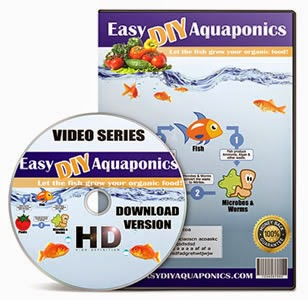 How To Easily Set Your Own Aquaponics At Home.