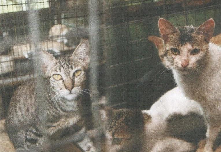 Nasib Malang Kucing Jalanan Oh Rojak