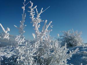 Soğuk Manzara