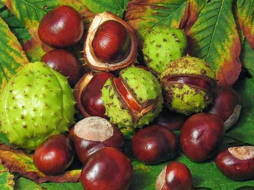 Плодовете му дават енергия, защитавайки от геопатогенните зони