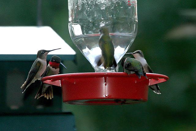 Juntando s maras como hacer bebederos para colibr es for Bebederos para aves jardin