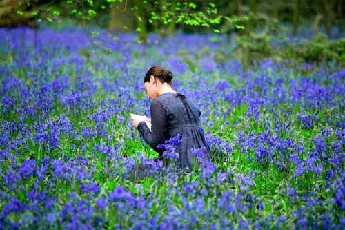 Read books on flower field