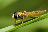 Insects HD 19