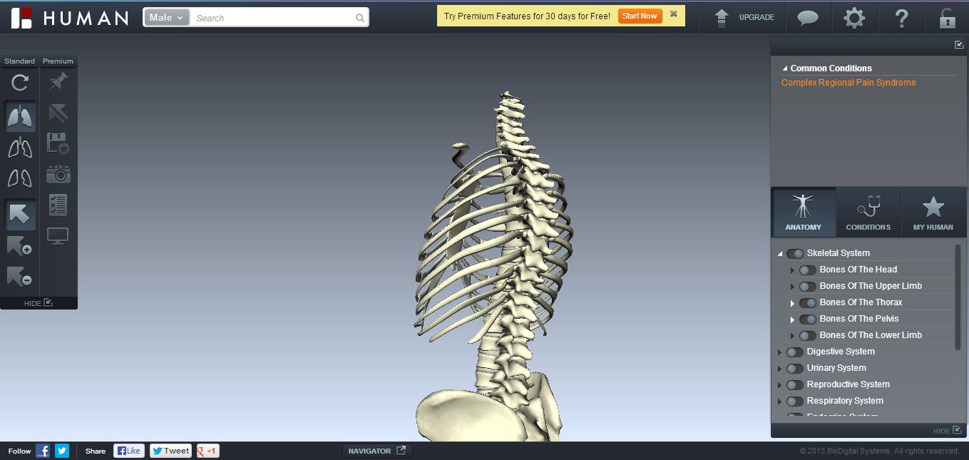 Tecnicos Radiologos: Navegador de Anatomía: Biodigital Human