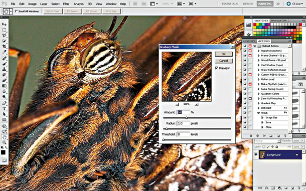 How to set your autofocus for macro photography