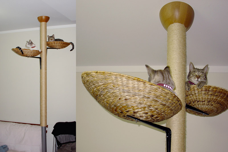 Kitty towers and outdoor tents for two cat cats kitties ask metafilter - Modern cat tree ikea ...