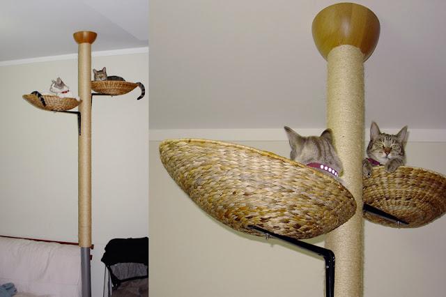 Cat Climbing Wall Uk