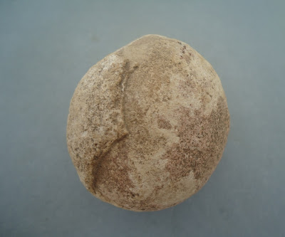 Fossilized Dinosaur Egg