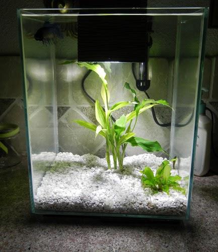 fluval chi chinese nano aquariums fluval aquariums. Black Bedroom Furniture Sets. Home Design Ideas