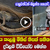 Snake Man From Indonesia Caught on Camera - (Watch Video)