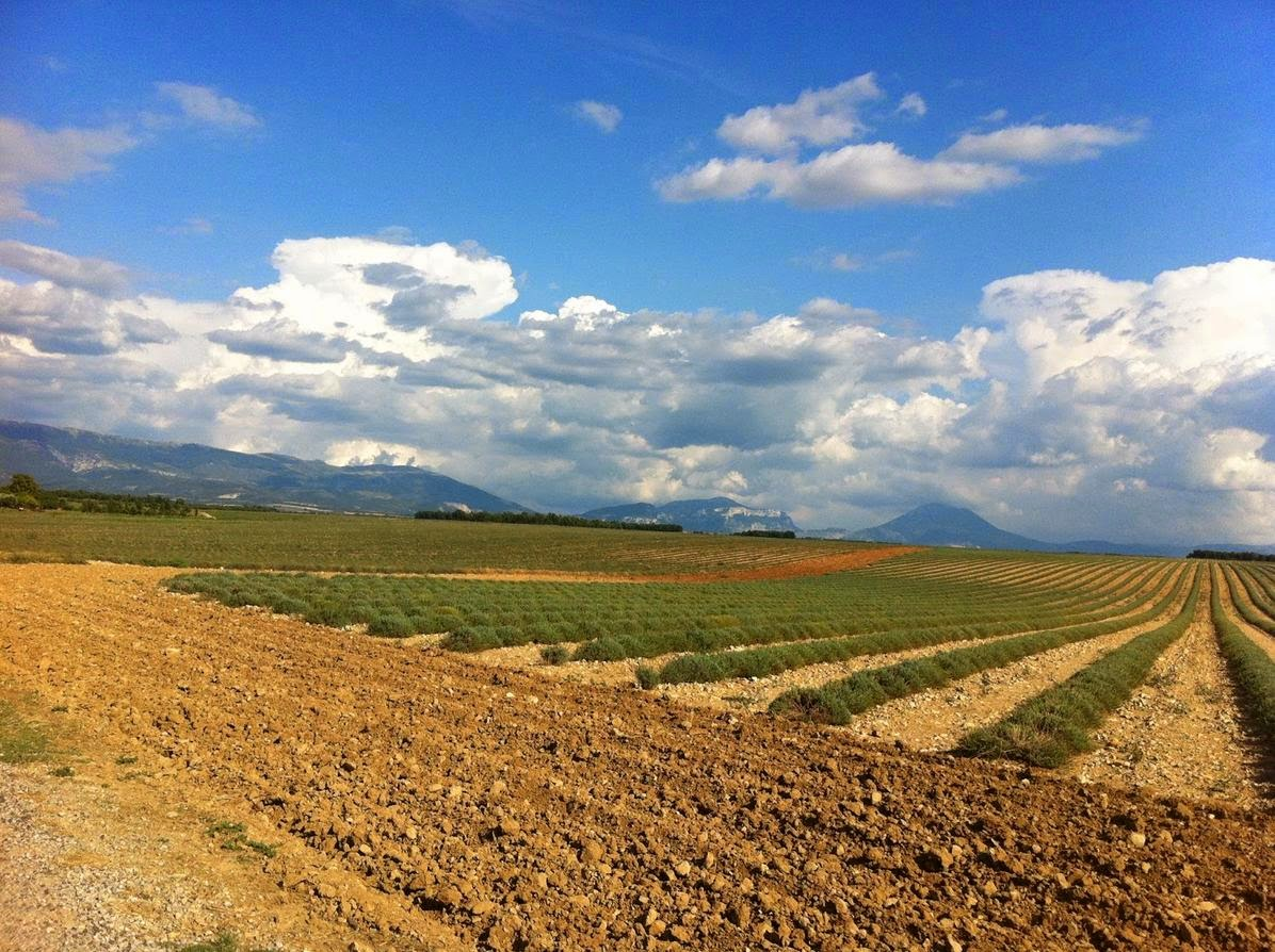 Imparare con la geografia 20 l 39 agricoltura e i paesaggi for Scaffali di campagna francese