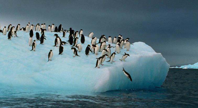 Islas malvinas 01 pinguinos en la ant rtida argentina for Espectaculos en argentina 2016