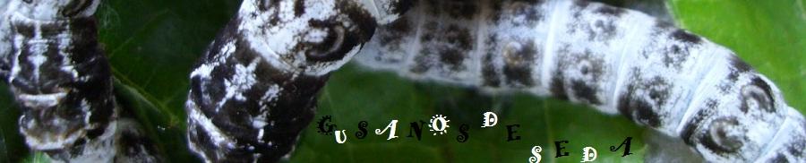 gusanos de seda crevillente blog