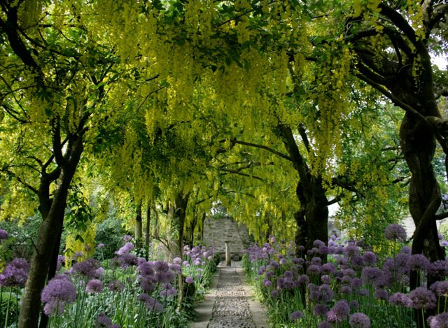 Laburnum walk in May at Barnsley House, Cotswolds, via their facebook page, as seen on http://www.linenandlavender.net/2013/05/the-english-garden.html