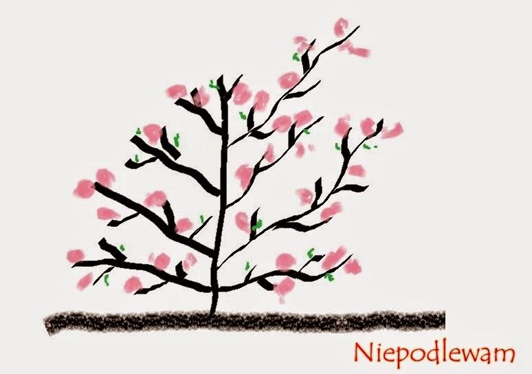 Jak i kiedy ciąć magnolie