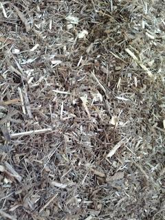 Eucalyptus Fines & Pins