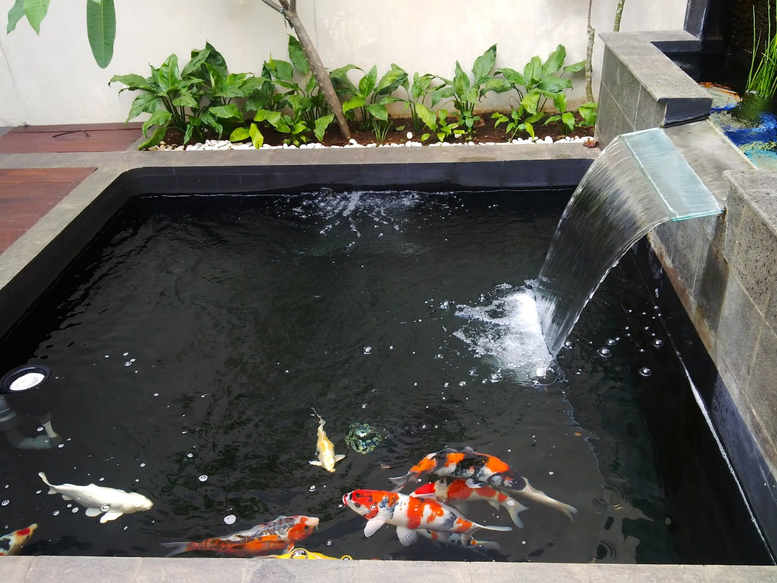 Anoxic filtration system an update on yogas s pond in for Koi pond sand filter system