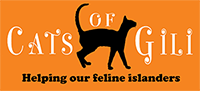 Support Cats of Gili